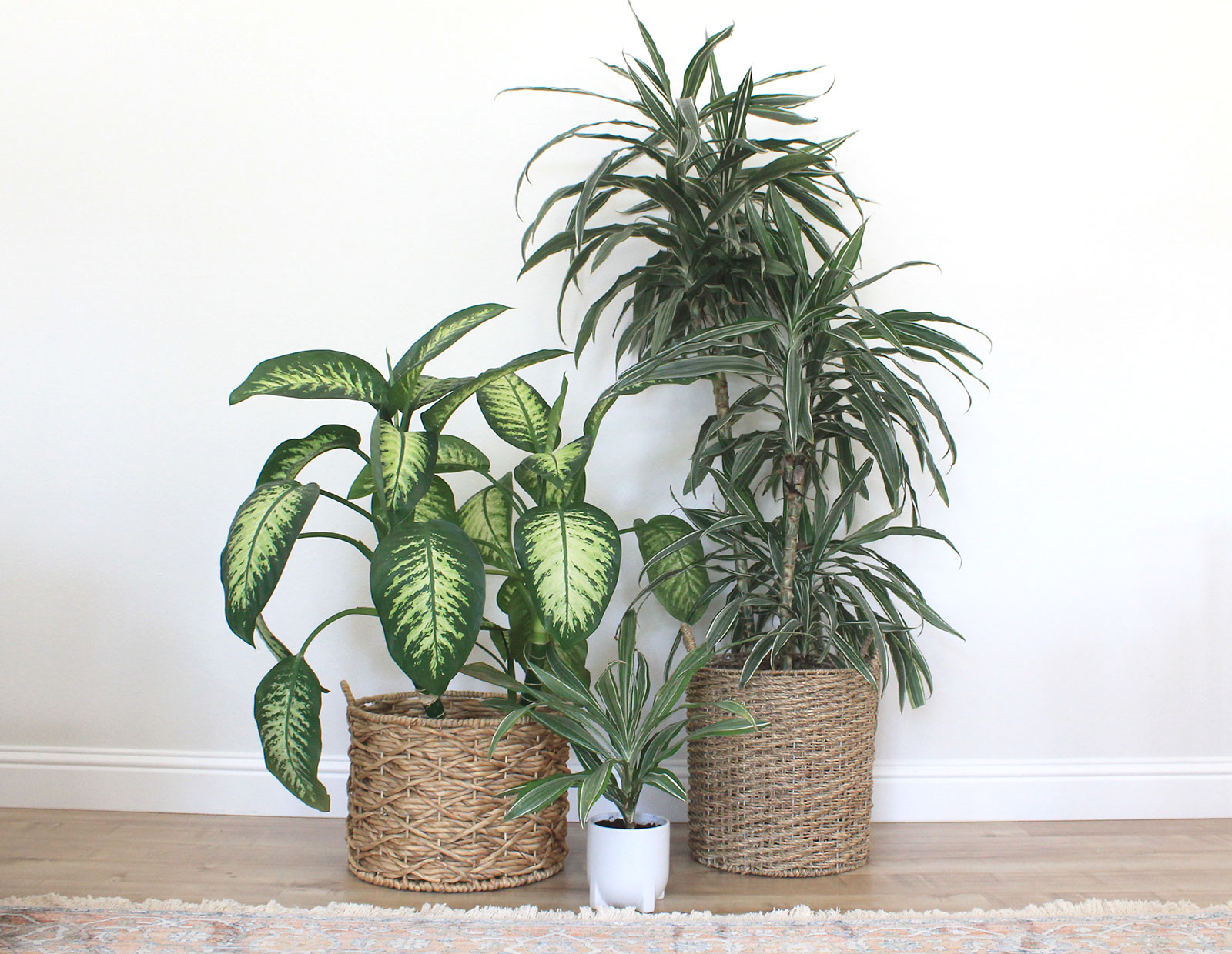 How to clean houseplants